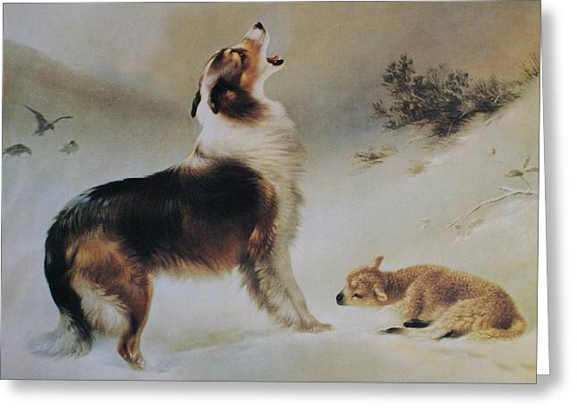 Puppies Digital Art Greeting Cards - Found Greeting Card by Albrecht Schenck