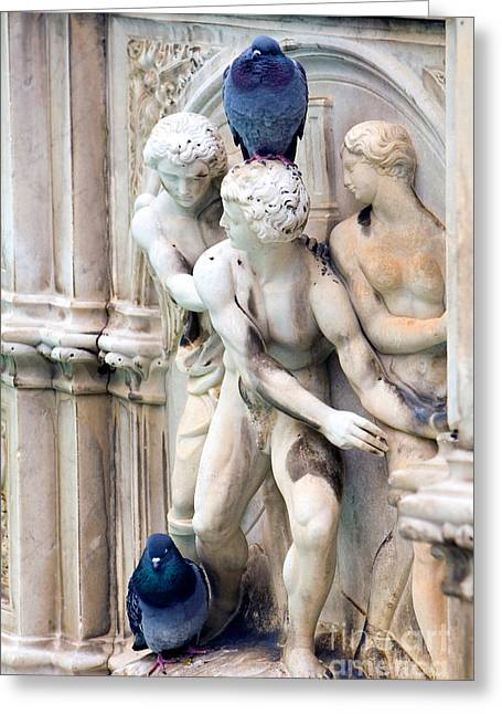 Fountain With Pigeons Greeting Card by Tim Holt