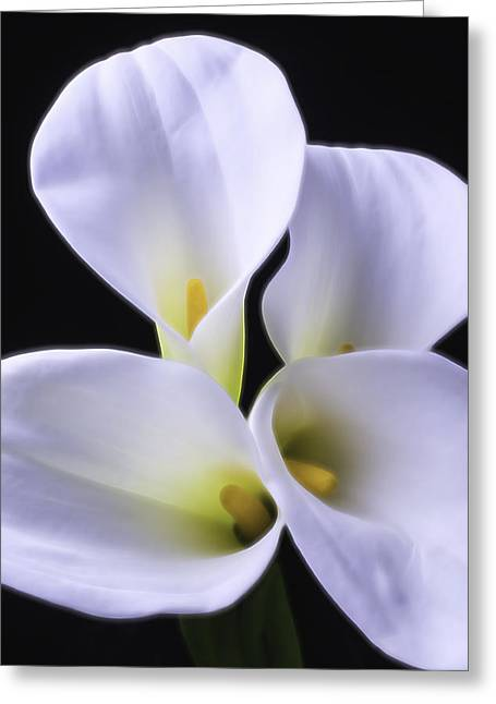 Calla Lily Greeting Cards - Four Calla Lilies Greeting Card by Garry Gay
