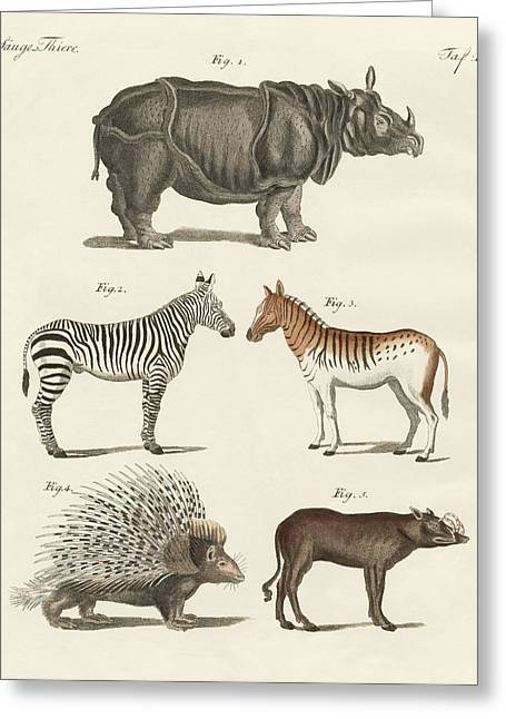 Rhinoceros Drawings Greeting Cards - Four-footed animals Greeting Card by Friedrich Justin Bertuch