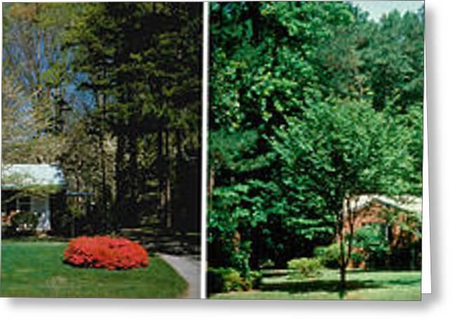 Fall Grass Greeting Cards - Four Seasons Greeting Card by Novastock