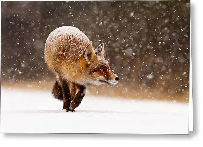 Red Foxes Greeting Cards - Fox First Snow Greeting Card by Roeselien Raimond