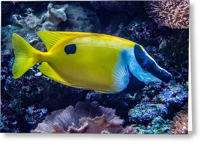Tennessee Aquarium Greeting Cards - Foxface Rabbitfish 1 Greeting Card by Douglas Barnett