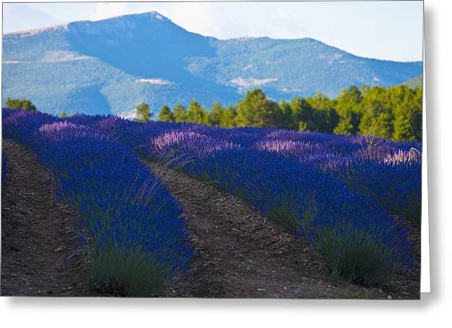 French Open Greeting Cards - France, Southern France Greeting Card by Carlos Sanchez Pereyra