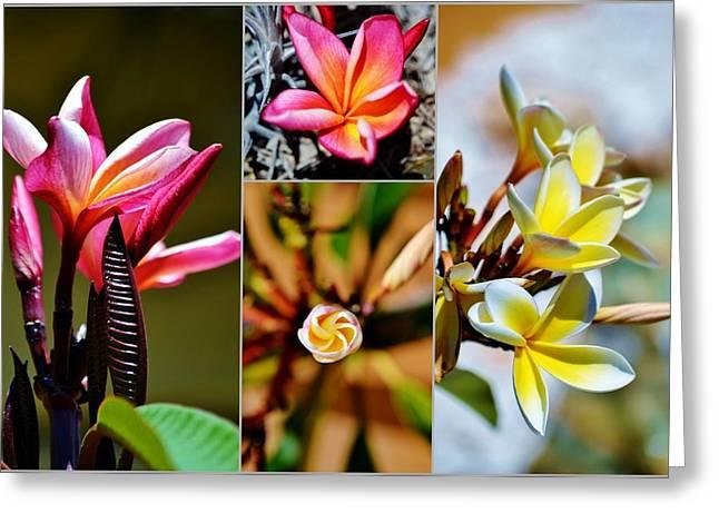Decorativ Greeting Cards - Frangipani blossoms Greeting Card by Werner Lehmann