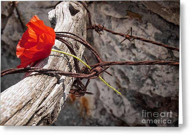 Liberation Greeting Cards - Freedom or Death Greeting Card by Sinisa Botas