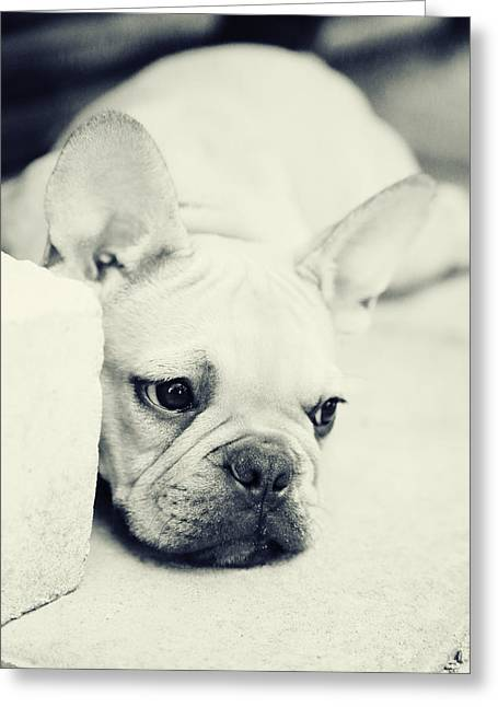 Tiere Greeting Cards - French Bulldog Greeting Card by Falko Follert