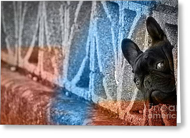 Pet Portraits Greeting Cards - French Bulldog  Greeting Card by Marvin Blaine