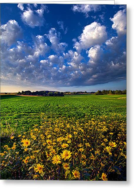 Winter Storm Greeting Cards - Fresh Air Greeting Card by Phil Koch