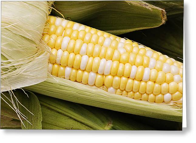Sweet Corn Greeting Cards - Fresh Corn On The Cob Greeting Card by Donald  Erickson