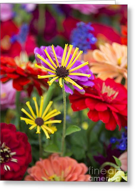 Annual Greeting Cards - Fresh Flowers Greeting Card by John Greim