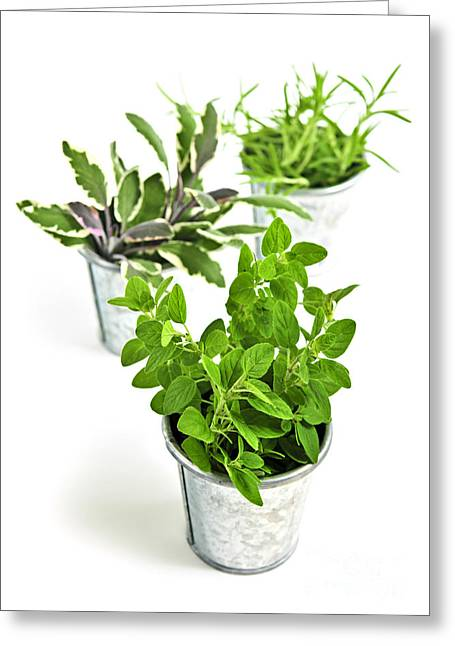 Various Greeting Cards - Fresh herbs in pots Greeting Card by Elena Elisseeva