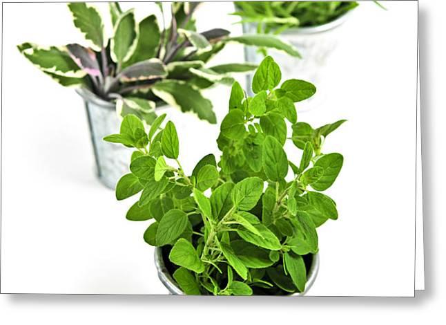 Fresh herbs in pots Greeting Card by Elena Elisseeva