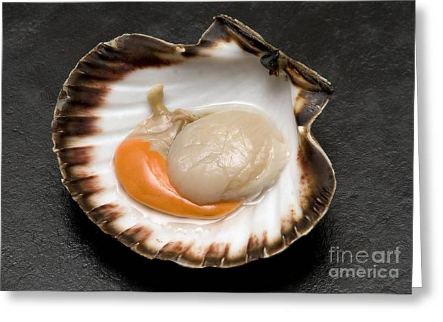 Half Shell Greeting Cards - Fresh Scallop Greeting Card by Sinclair Stammers