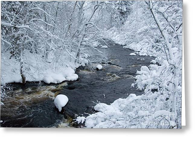 Winter In Maine Greeting Cards - Fresh Snow Greeting Card by Alana Ranney