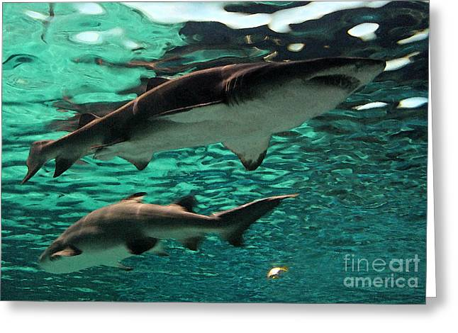 White Shark Greeting Cards - From the Deep Greeting Card by Suzanne Gaff