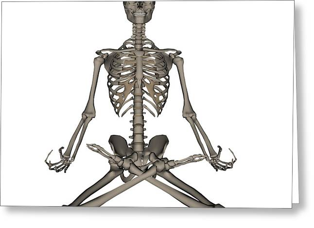 Front View Of Human Skeleton Meditation Greeting Card by Elena Duvernay