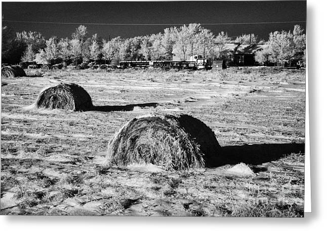 Snow Covered Field Greeting Cards - frozen snow covered hay bales in a field Forget Saskatchewan Canada Greeting Card by Joe Fox