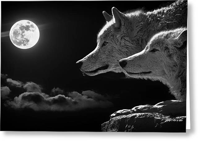 Recently Sold -  - Ledge Greeting Cards - Full Moon of the Wolf Greeting Card by Mountain Dreams