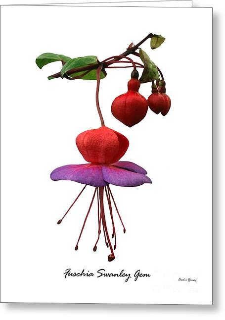 Fushia Swanley Gem Greeting Card by Archie Young