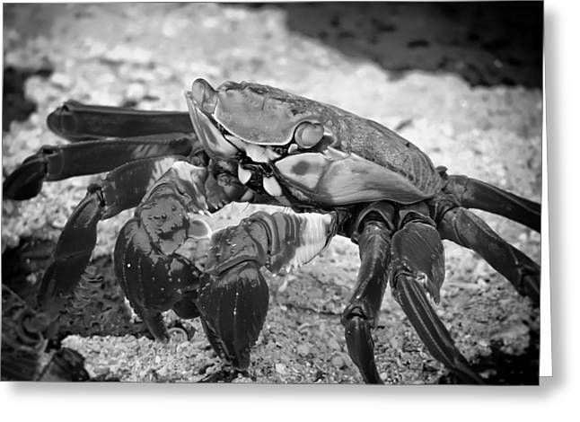 Pincers Greeting Cards - Galapagos Crab Greeting Card by Mountain Dreams