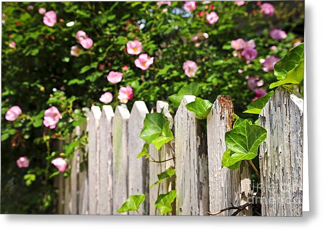 Picket Greeting Cards - Garden fence with roses Greeting Card by Elena Elisseeva