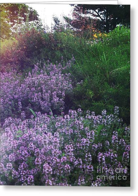 Lavendar Greeting Cards - Garden Greeting Card by HD Connelly