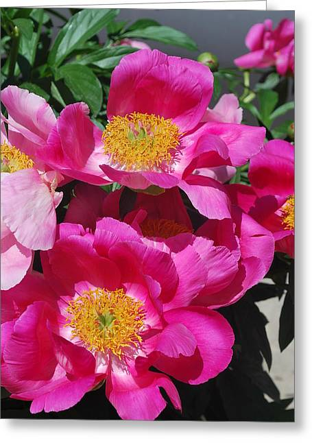 Sunlight On Flowers Greeting Cards - Garden Party Greeting Card by Billie Colson