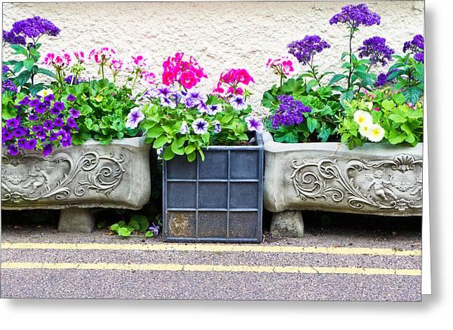 Trough Greeting Cards - Garden plants Greeting Card by Tom Gowanlock