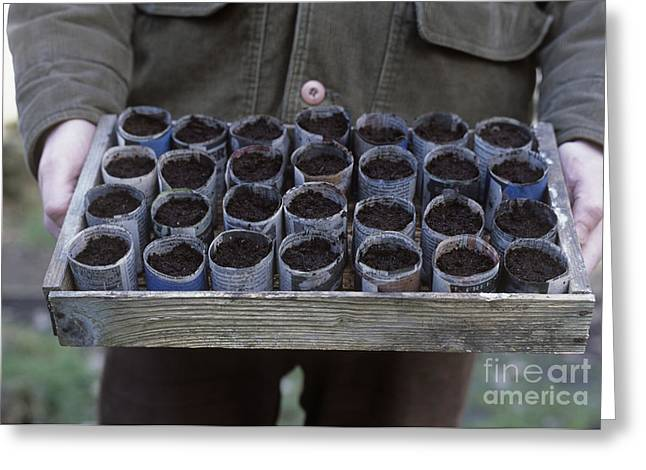 Seed Pot Greeting Cards - Gardener With A Tray Of Seed Pots Greeting Card by Maxine Adcock