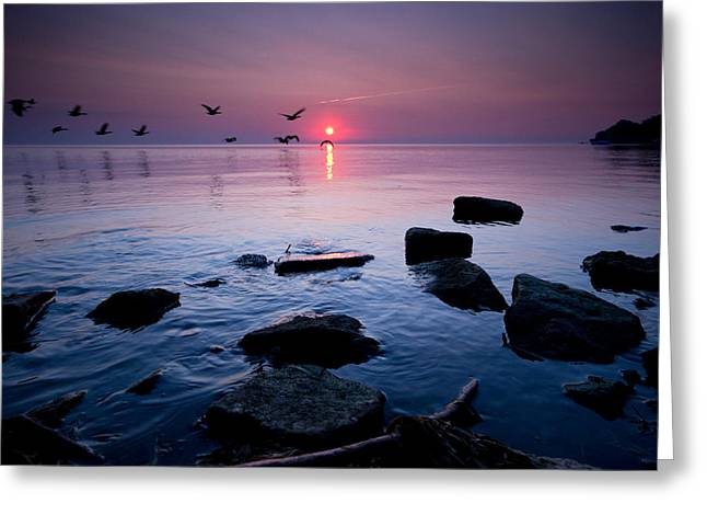 Sunrise Greeting Cards - Geese at Sunrise Greeting Card by Cale Best