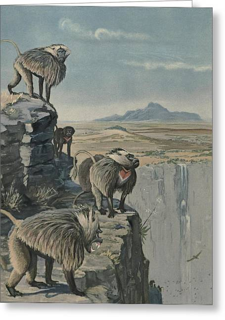 Agassiz Greeting Cards - Gelada Baboon Greeting Card by Louis Agassiz Fuertes