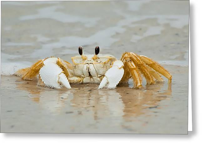 St Joseph Peninsula State Park Greeting Cards - Ghost Crab Greeting Card by Rich Leighton
