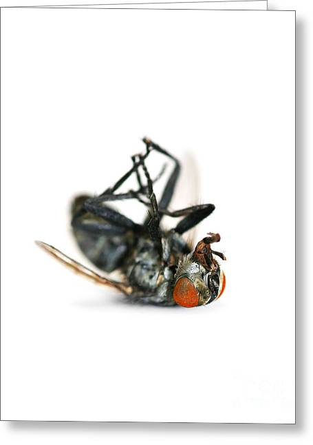 Giant Dead Fly Greeting Card by Jorgo Photography - Wall Art Gallery
