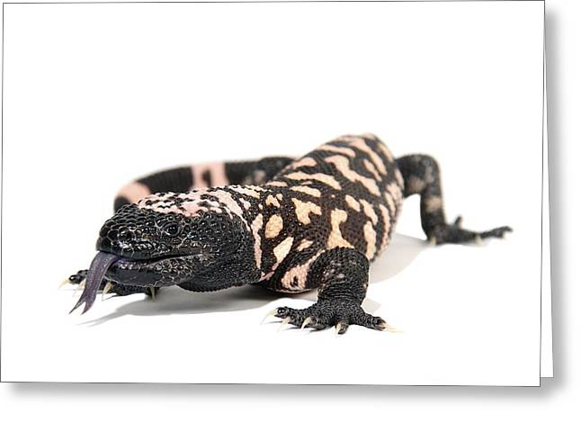 Forked Tongue Greeting Cards - Gila Monster Greeting Card by Gerry Pearce