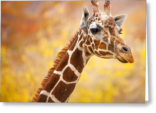 Top Seller Greeting Cards - Giraffe Greeting Card by David Millenheft