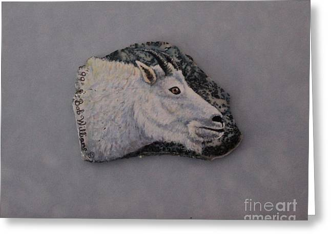 Fineartamerica Drawings Greeting Cards - Glacier Park Mountain Goat Greeting Card by Bob Williams