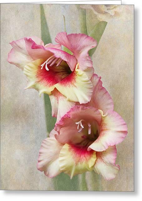 Gladiolas Greeting Cards - Gladiola Greeting Card by Angie Vogel