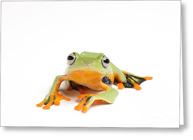 Recently Sold -  - Flying Frog Greeting Cards - Gliding Frog Greeting Card by Scott Linstead