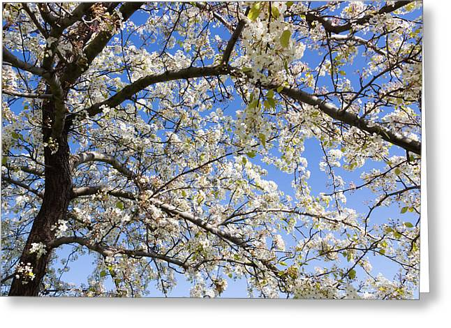 Fruit Tree Art Greeting Cards - Glimpse Of Spring Greeting Card by Heidi Smith