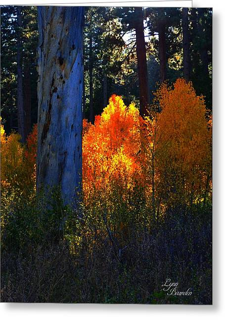 Lynn Bawden Greeting Cards - Glowing Aspens Greeting Card by Lynn Bawden