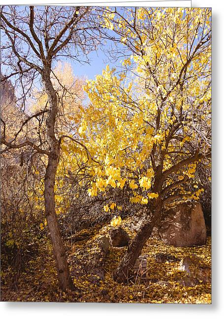 Gold Leave Greeting Cards - Glowing Tree Greeting Card by Gloria Pasko