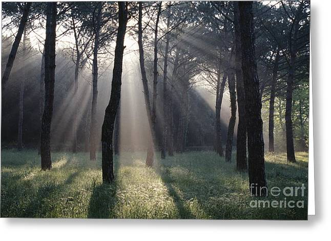 Uncrowded Greeting Cards - God Light Greeting Card by Chris Selby