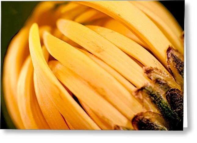 Owfotografik Greeting Cards - Going Bananas Greeting Card by Omaste Witkowski