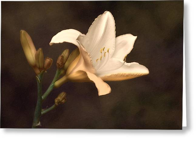Stamen Greeting Cards - Golden Daylily Greeting Card by Tom Mc Nemar