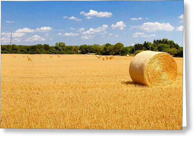 Golden Harvest Greeting Card by Roger Gallamore