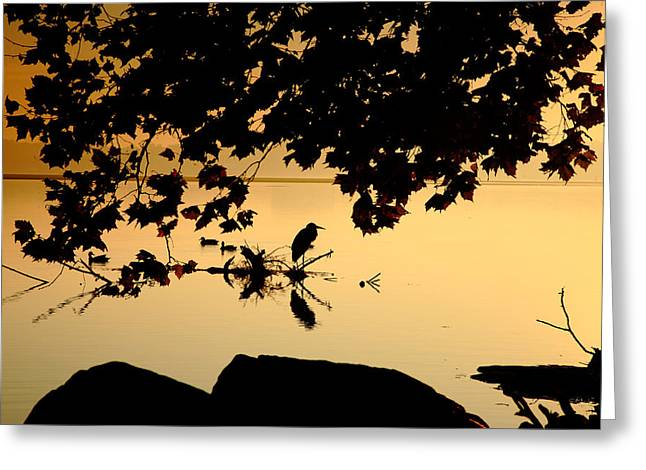 Wildlife Refuge. Greeting Cards - Golden Morning II Greeting Card by Steven Ainsworth