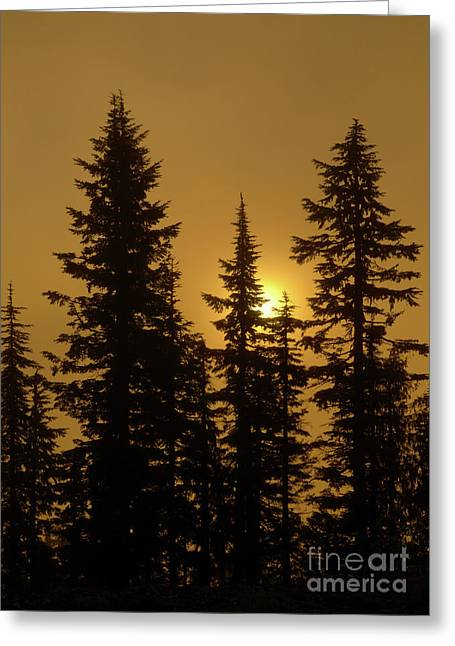 Crepuscular Rays Greeting Cards - Golden Morning Greeting Card by Mike Dawson