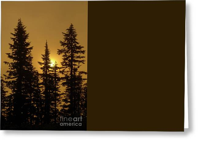 Golden Morning Greeting Card by Mike Dawson