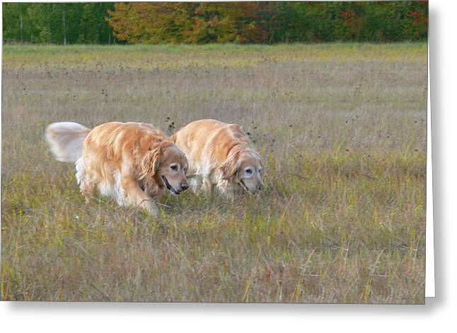 Yellow Dog Falls Greeting Cards - Golden Retriever Dogs on the Hunt Greeting Card by Jennie Marie Schell